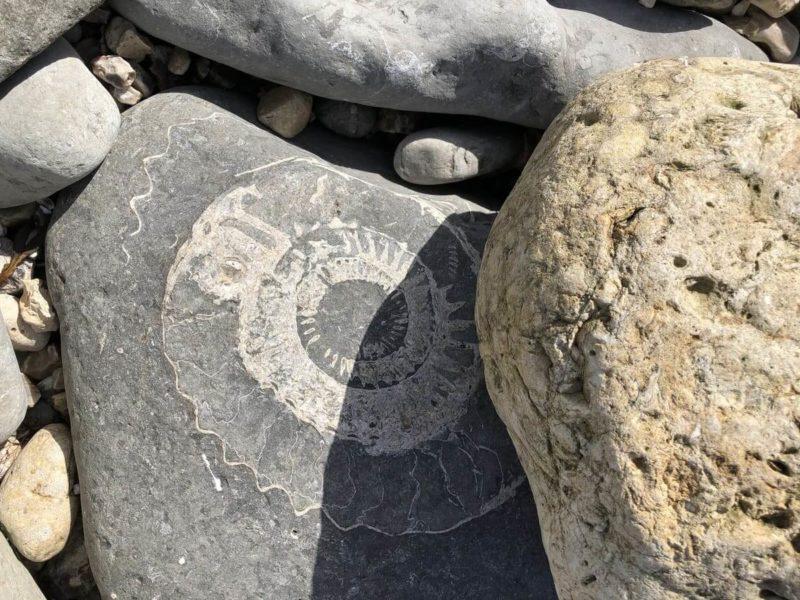 ライム・リージス 化石探し